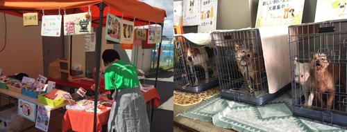 第16回保護犬猫譲渡会