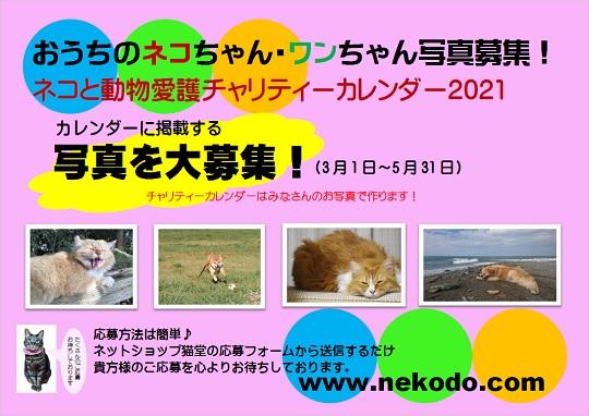 ネコと動物愛護チャリティーカレンダー2021、おうちのネコちゃん・ワンちゃん写真募集チラシ