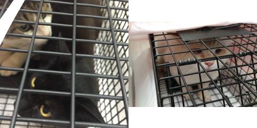 猫のTNR活動