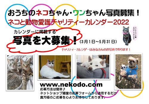 ネコと動物愛護チャリティーカレンダー2022、おうちのネコちゃんワンちゃん写真募集ポスター