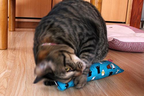 またたび入り手作りキッカー猫の演奏会、めぐ店員