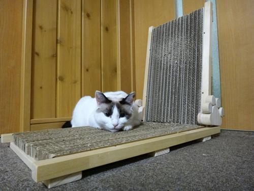 猫の手作り爪とぎ、姫花(4歳)アゴ乗せに使用