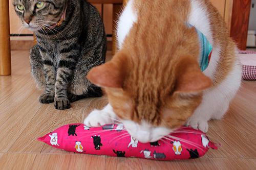 またたび入り手作りキッカー猫の演奏会、をちび店員
