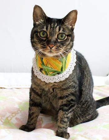 猫のリバーシブルバンダナ、猫堂店長ちゃあ2