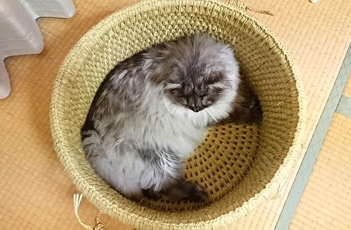 猫つぐらオーダー品4