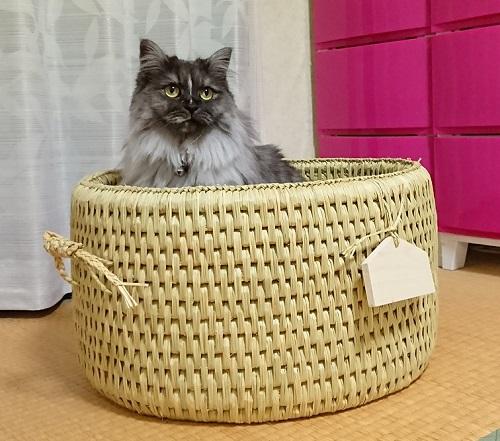 猫つぐらオーダー品3