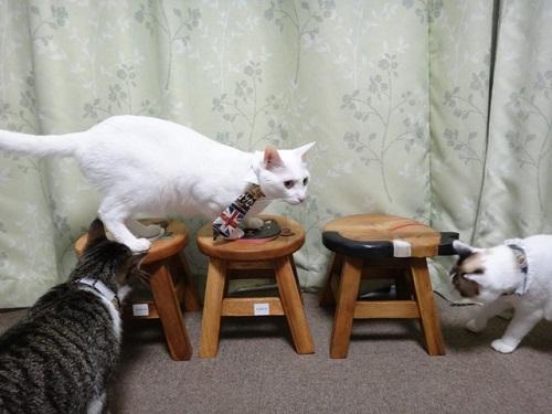 飛麿(左)伊之助(中)姫花(右)