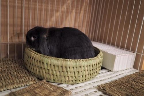 猫つぐら丸形なごみベッド、うさぎさんより