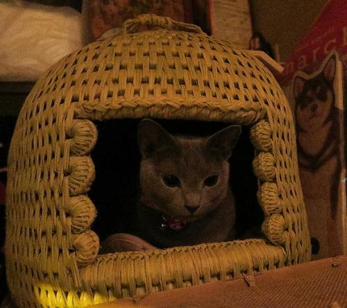 猫つぐら(猫ちぐら)ジジちゃんよりお写真