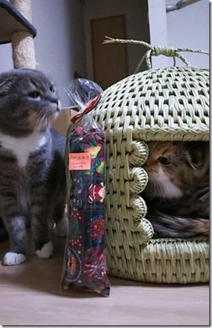 猫つぐら(猫ちぐら)お客様より1
