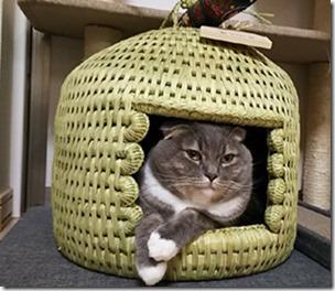 猫つぐら(猫ちぐら)お客さまより2