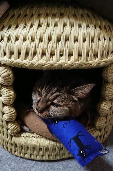 猫つぐら(猫ちぐら)猫ちゃんより