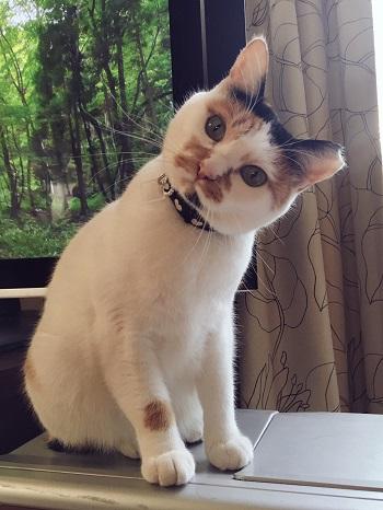 猫の手作り首輪、モグちゃん