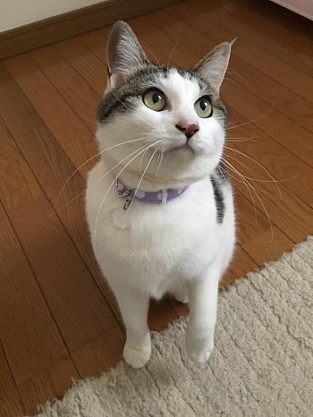 猫の手作り首輪、すももちゃん