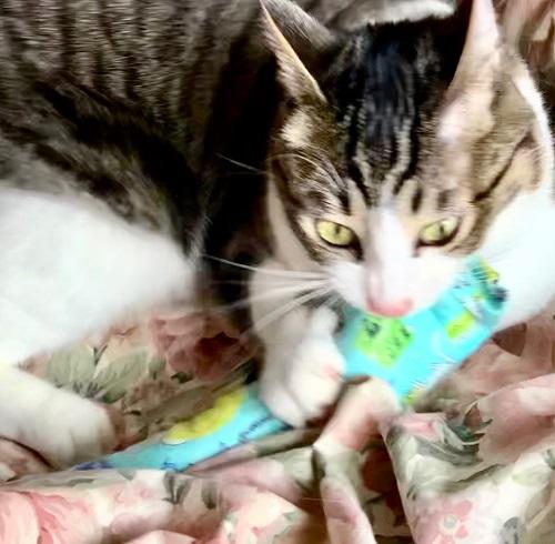 猫のおもちゃ、またたび入り手作りキッカー