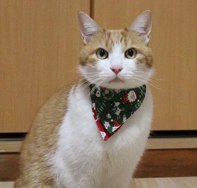 猫の首輪用、付け替えバンダナクリスマス柄、をちび店員