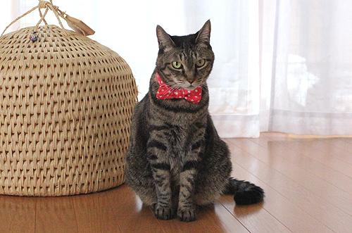 猫のおしゃれリボン首輪、めぐ店員