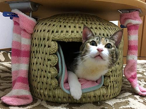 オーダーメイド猫つぐら