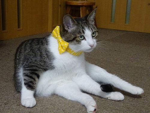 猫のおしゃれリボン首輪、スター柄イエロー