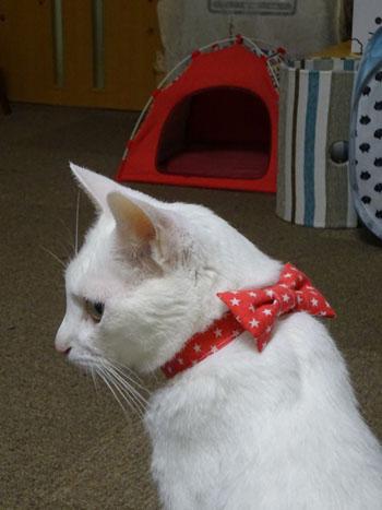 猫のおしゃれリボン首輪、スター柄レッド