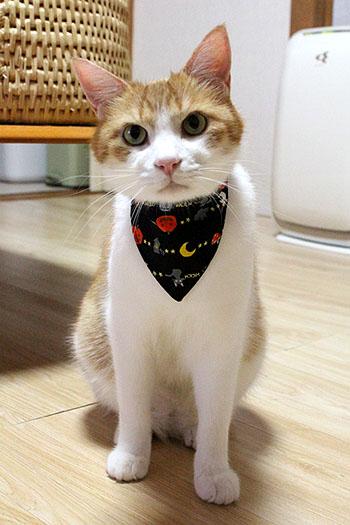 猫のおしゃれバンダナ、ハッピーハロウィンをちび店員