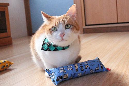 猫堂店員、をちび