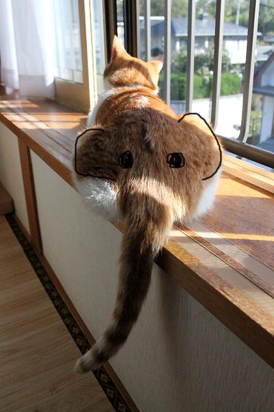 をちび猫のしりゾウ