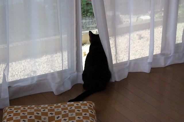 1Fの窓辺で外観察猫