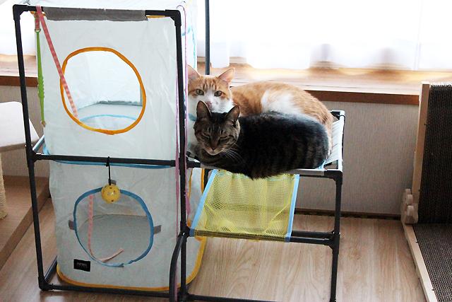 キャットプレイセンターのハンモックが猫に人気