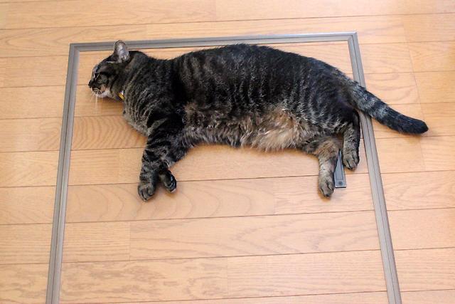 打ち上がったっぽい猫