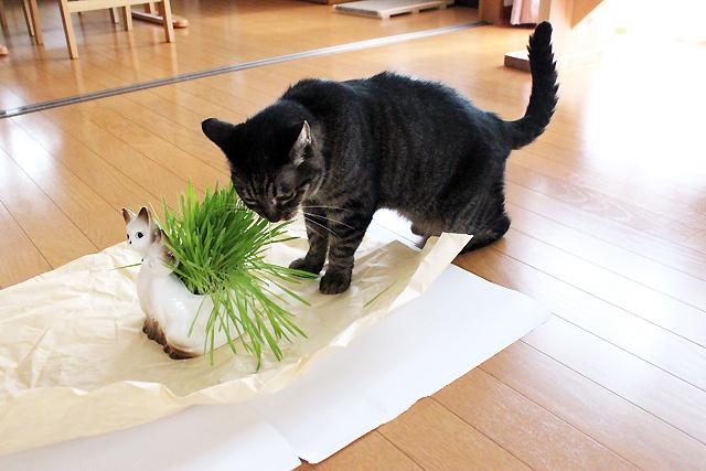 さっそくやってきた猫ちゃあさん