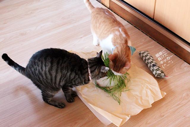 おめぐさんとをちびも猫草大好き