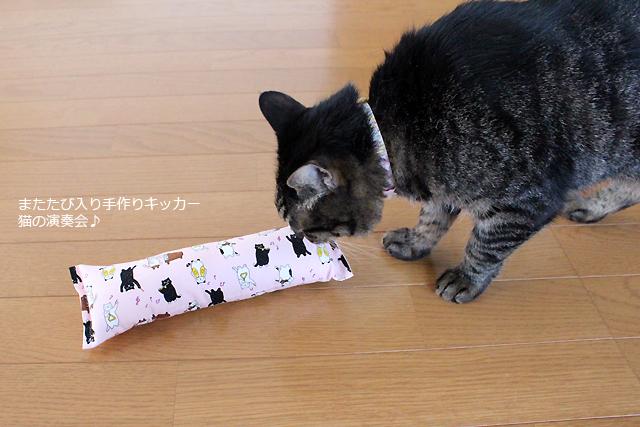猫堂ちゃあ店長、またたび入り手作りキッカー猫の演奏会ピンク