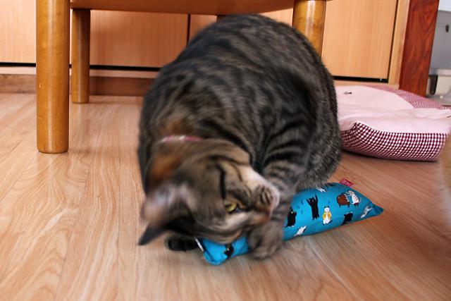 猫堂めぐ店員、またたび入り手作りキッカー猫の演奏会ブルー