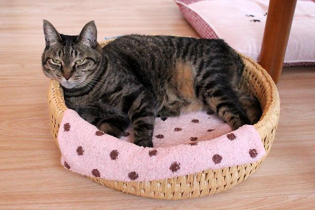 おめぐさんのお気に入り、猫つぐら丸型なかよしベッド