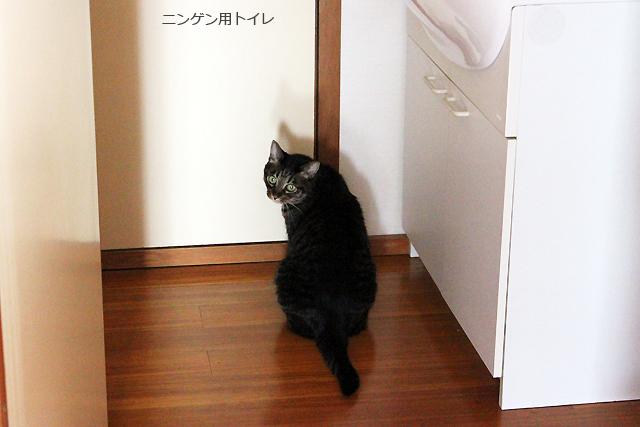 トイレで呼ぶ猫