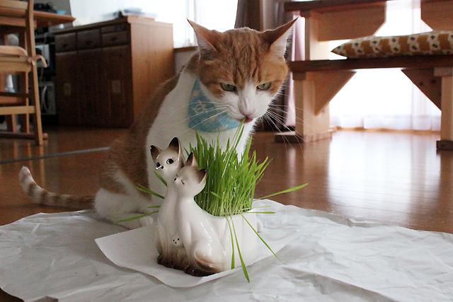 猫草をちび
