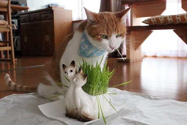 猫草ツツーっと