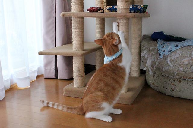 キャットタワーで爪とぎ猫