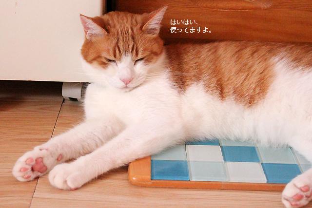 猫用冷え冷えタイルシート使ってます