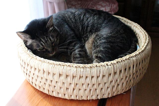 猫つぐら丸型なごみベッド、お昼寝ちゃあさん