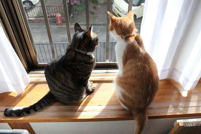 またまた外観察猫