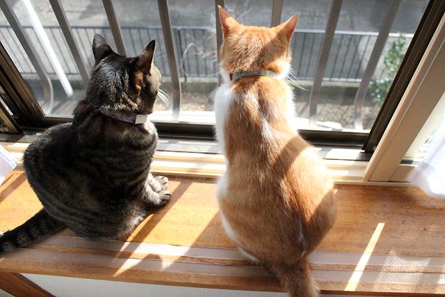 仲良し猫ふたたび