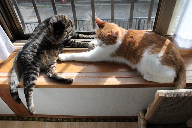 おくつろぎ猫