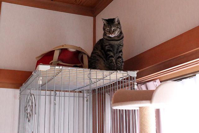 おめぐさん3段ケージの屋上へ避難