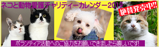 ネコと動物愛護チャリティーカレンダー2019発売です!