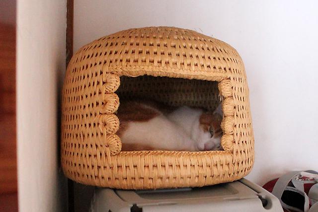 猫つぐら猫をちび