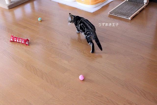 毛糸玉ボールで遊ぶうずまき王子