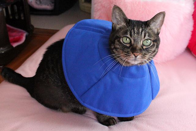 ソフトカラー猫ちゃあさん