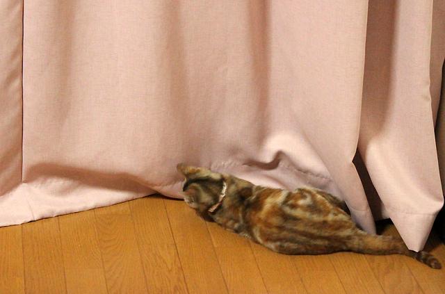 保護猫なでなでちゃん